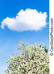 white cloud in blue sky and flowering cherry tree in spring