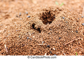 Anthill closeup Photographed on a sunny day in the street...