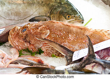 scorpion fish - detail of a scorpion fish at market in italy