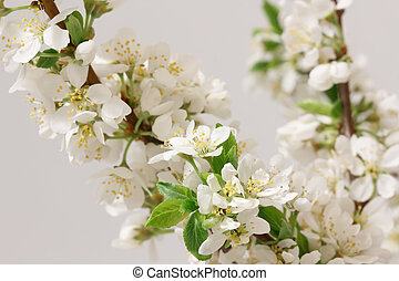 Spring flowering - A branch with lots of white flowers...