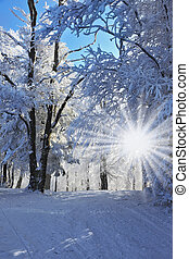 Christmas morning - Christmas sunny morning. Rolled ski road...