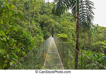 Hanging bridge, Costa Rica - Suspended bridge at natural...