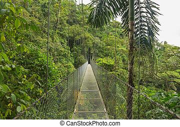 Hanging bridge, Costa Rica - Suspended bridge at natural...