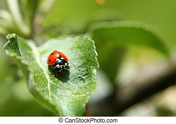 lady bug - a lady bug is sitting on a green leave