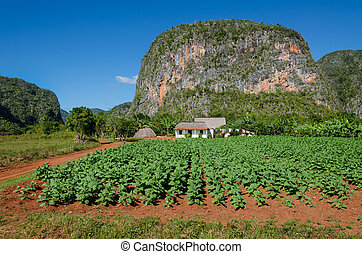 Tabacco Valley de Vinales and mogotes in Cuba - Typical view...