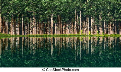 lake with trees at coast line