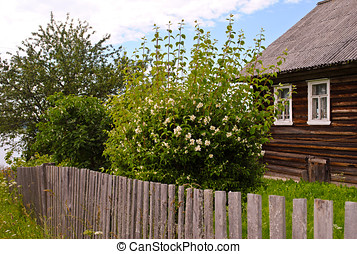 Blooming jasmine bush near unpainted wooden house - Jasmine...