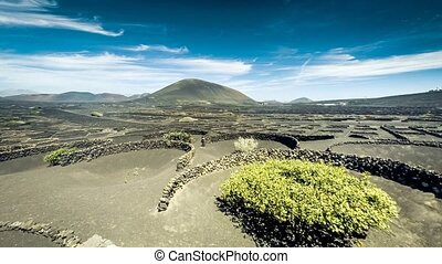 Timelapse of vineyards on Lanzarote Island, Canary Islands,...