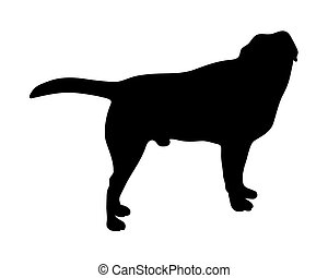 black silhouette of standing dog