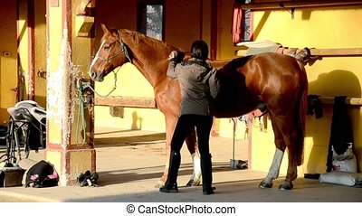 woman brushing a beautiful horse - Taking care of a stabled...