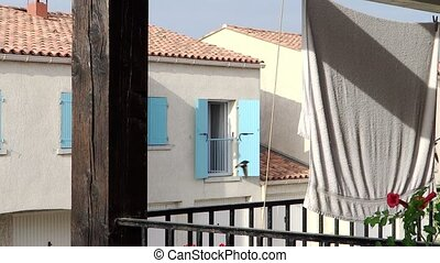 glimpse of provence building - red flowers, blue shutter and...