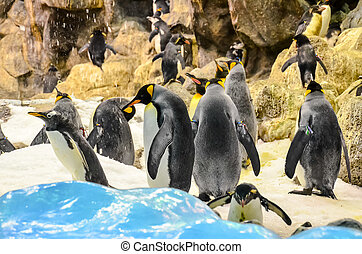Black and White Penguin - Black and White Colored Penguin in...