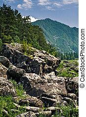 Altai mountains, bank of Katun river
