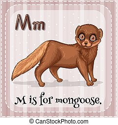 Alphabet M - Flashcard letter m is for mongoose