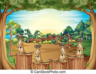 Meerkats standing on log in the jungle