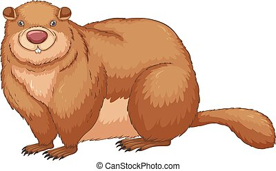 Woodchuck - Illustration of a close up woodchuck