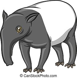 Tapir - Illustration of a tapir standing