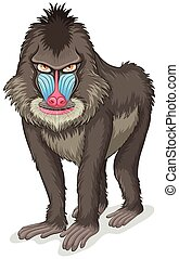 Baboon - Illustration of a close up baboon