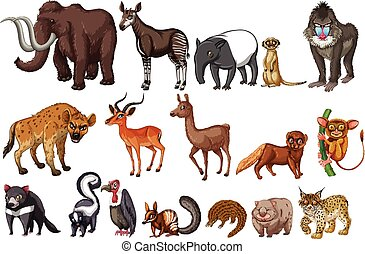 Rare animals - Different kinds of rare animals