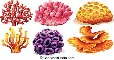 Coral reef - Six different type of colorful coral reef