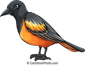 Oriole - Illustration of a closeup beautiful bird