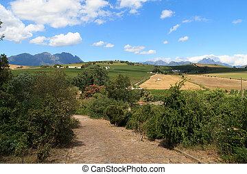 Stellenbosch hills - A view of hills near Stellenbosch,...