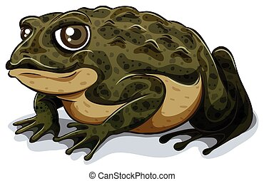 Toad - Illustration of a single close up toad
