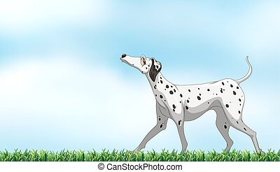 Dalmatian - Illustration of a dog standing in the park