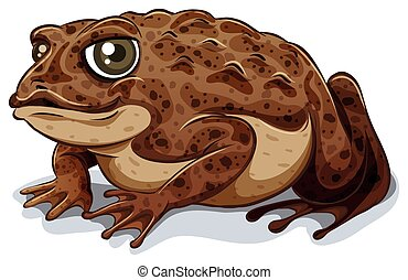 Toad - Illustration of a close up toad