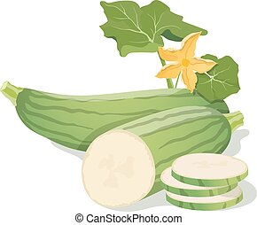 Marrow vegetables Vector illustration