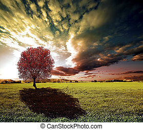 Sunset tree and green fields - Sunset green fields and tree...