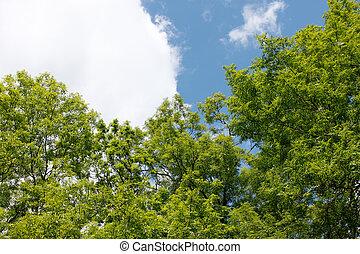 cinza, árvore, coroas