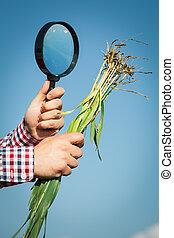 Farmer checking his crops