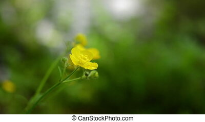 Yellow wild flower, blurred background - Yellow wild single...