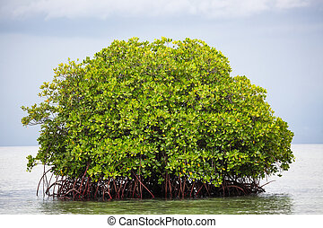 Mangrove tree in water bali indonesia