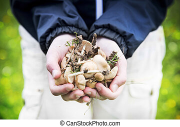 Child Hands Holding Edible Mushrooms