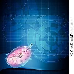 Ovary and ovulation - Ovary on a abstract blue background...