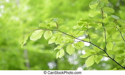 Green light leaves natural background - Green, fresh leaves...