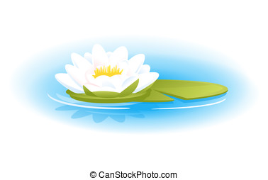 Water Lily - One white water lily with green leaf on blue...