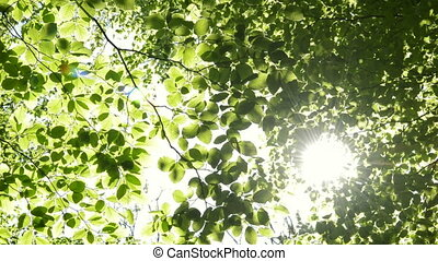 Sun shining through the branches of trees. Nature scene,...