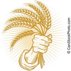 Handful of Wheat - A hand holding a shock of wheat