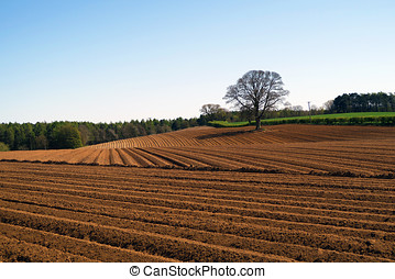 Ploughed field - Isolated tree stands of edge of ploughed...