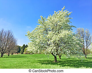 White blooming tree in spring garden