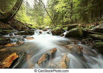 Forest stream in the valley flowing from the mountains