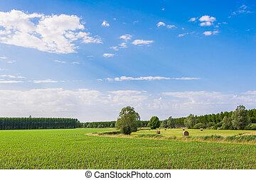 Agricultural landscape - Agricultural Landscape, field corn...