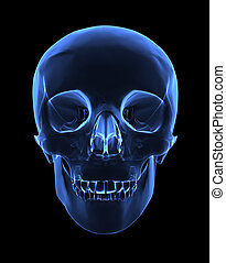 X-ray skull - Isolated human x ray skull on black background...