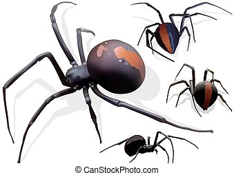 Black widow spider Illustrations and Stock Art. 750 Black widow ...