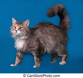 Fluffy gray cross-eyed cat goes on blue background