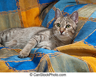 Striped cat lying on motley blanket - Striped cat lying on...