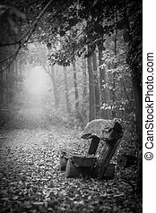 Bench in a forest - Vertical shot of a bench in a foggy...